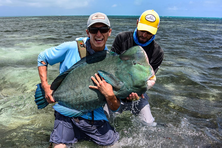 Customer cradles his prize caught fly fishing with sportquest in the seychelles a parrot bumphead fish