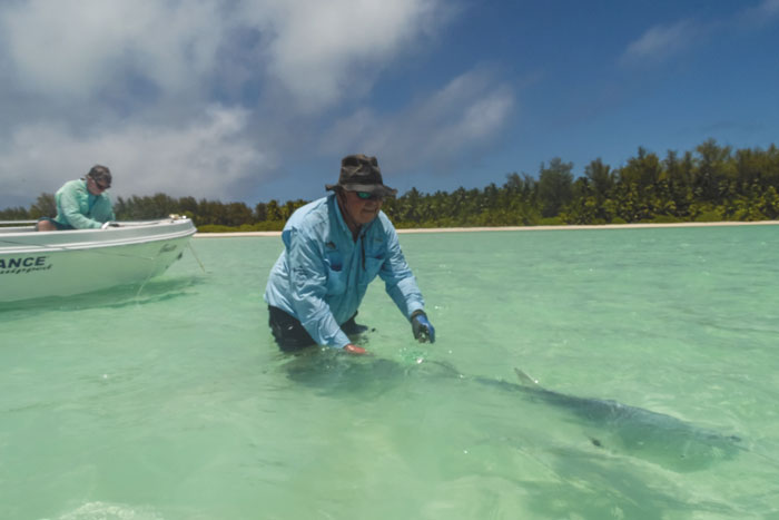 A great shot of the customer releasing a GT from our farquhar fishing report