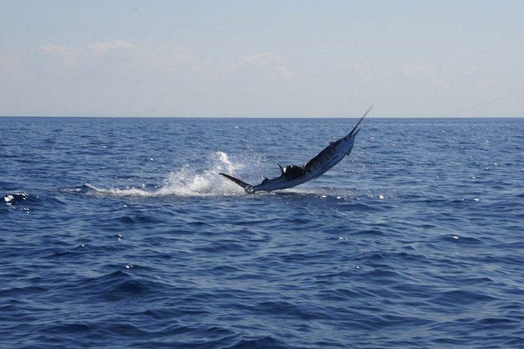 Goodbye El Niño Costa Rica Fishing Report