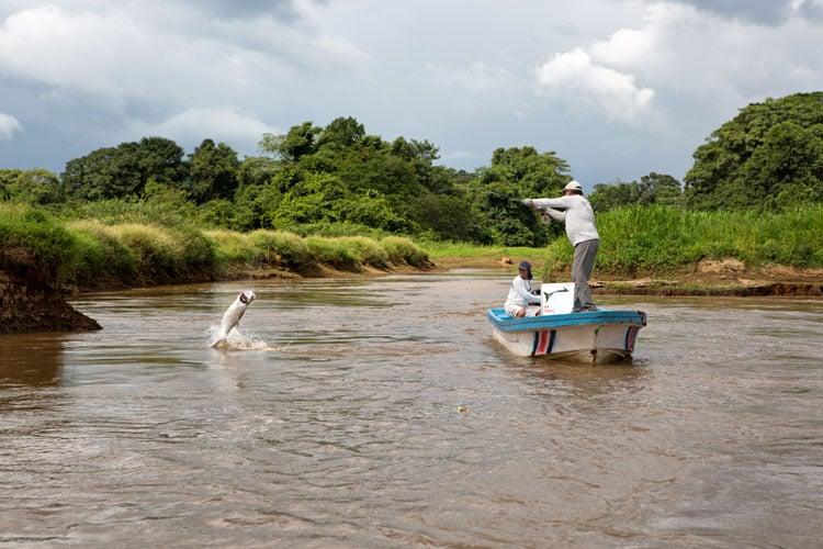 Fly fishing Tarpon Costa Rica