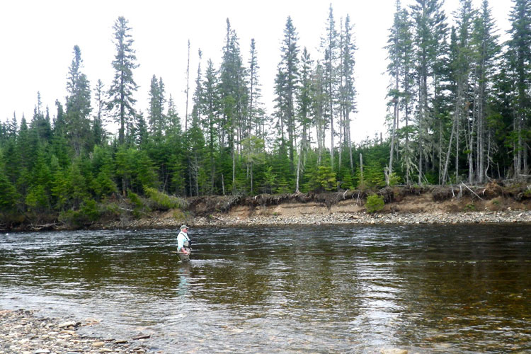 Camp Bonaventure & Salmon Lodge Fishing Report