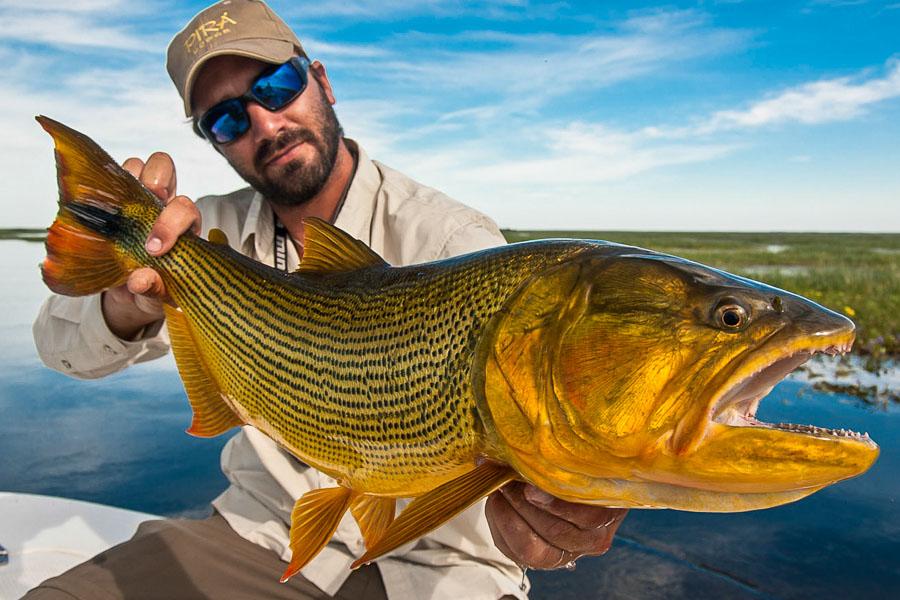 Golden dorado fishing pira lodge sportquest holidays for Golden dorado fish