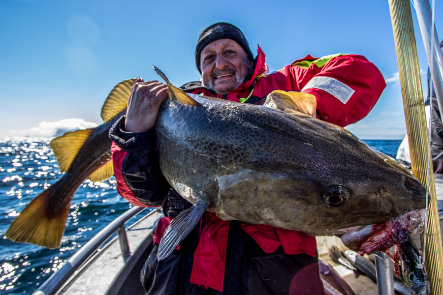 Halibut & Coalfish Fishing Norway