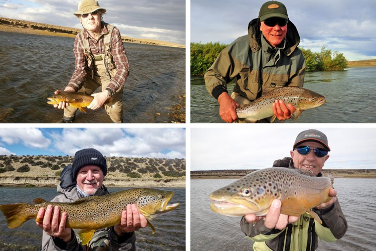 Brown trout caught on dry flies