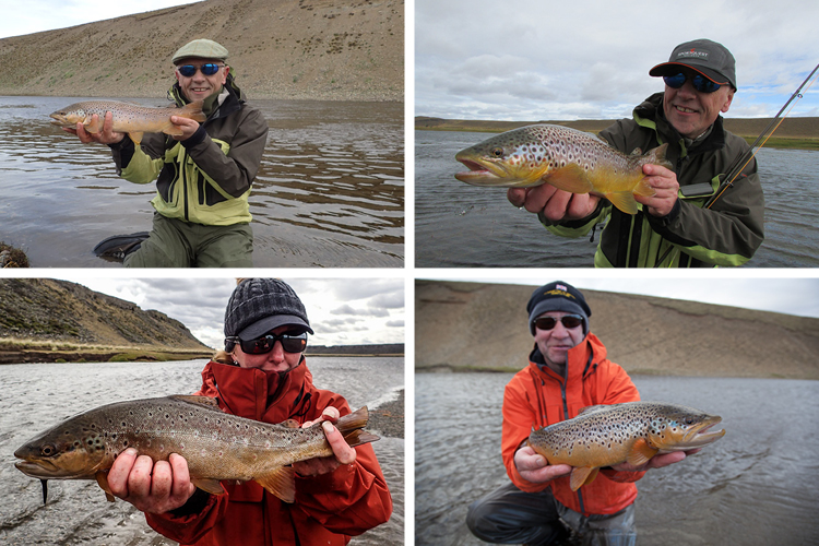Sea Trout caught on dry flies