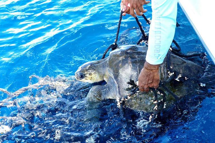 Sailfish Have Arrived Crocodile Bay Costa Rica
