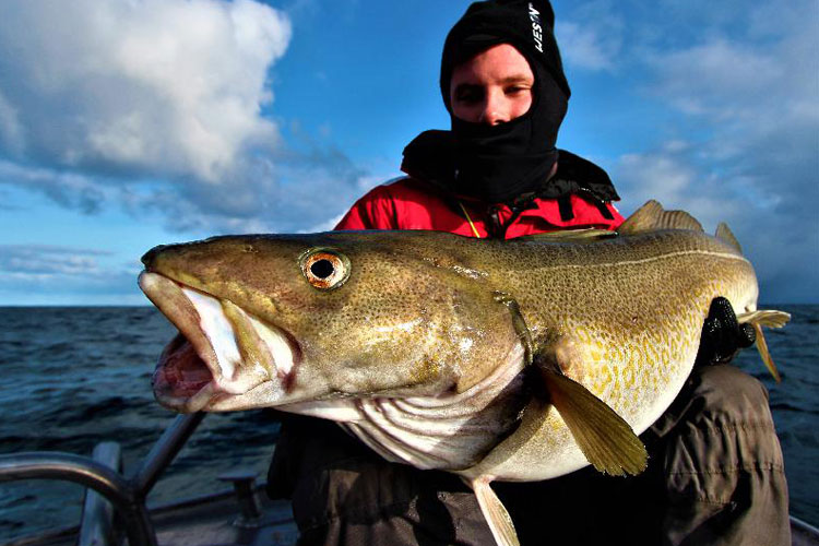 Norway Skrei Cod Fishing Three Different Destinations