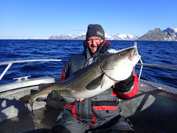 73LB Cod On The Hosted Mefjord Holiday