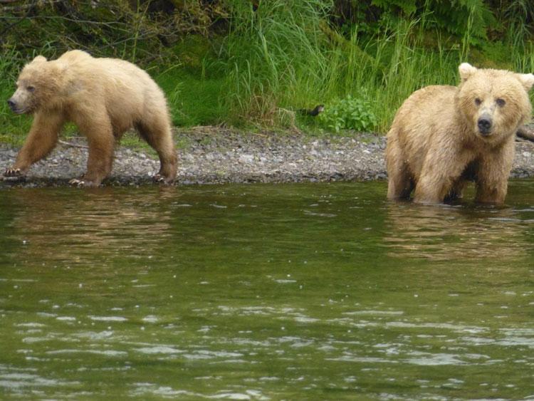 Hosted Salmon Fishing In Alaska