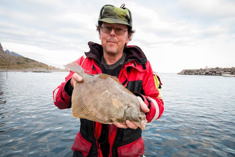 On the lofoten islands best place for huge coalfish for Is tomorrow a good fishing day
