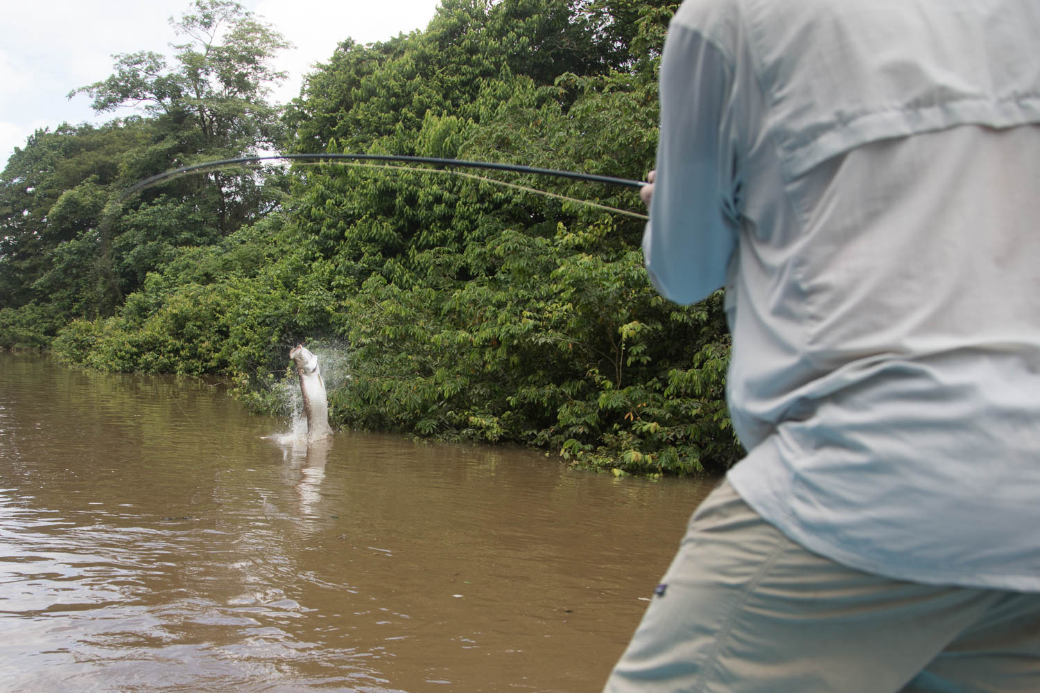 Tarpon Fly Fishing Costa Rica