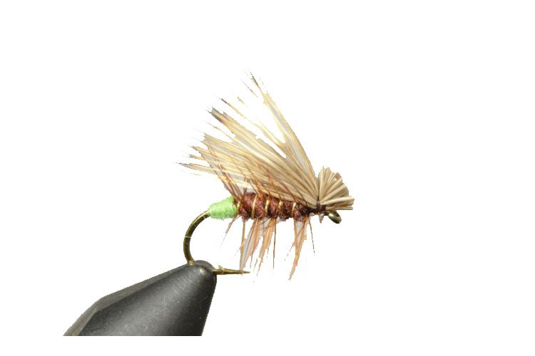 The best advice for Trout fishing