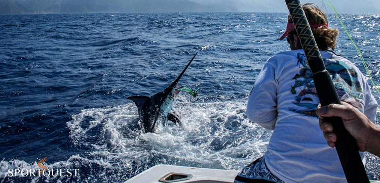 d825515b8c1 Free Big Game Fishing For All In Madeira