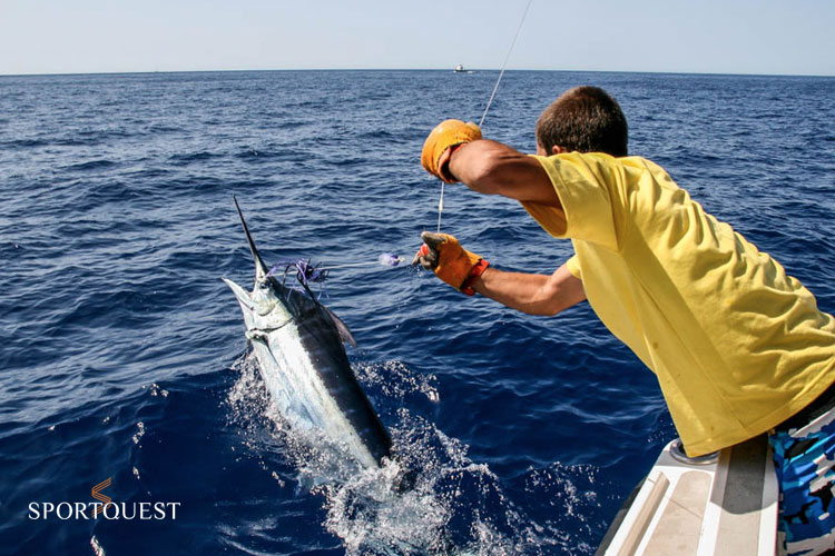 Blue Marlin Fishing Madeira