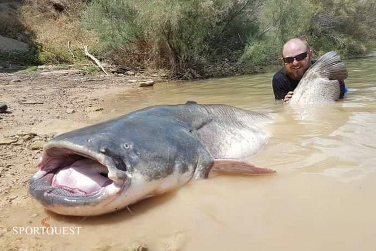 Catfishing on the River Ebro