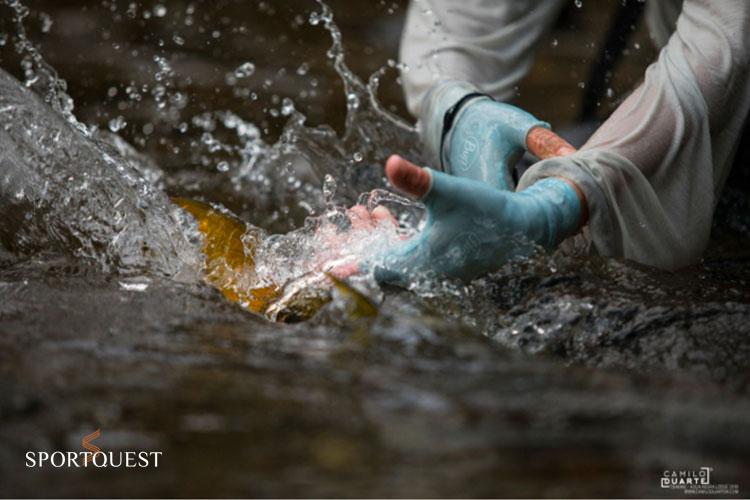 Golden dorado fishing at its best