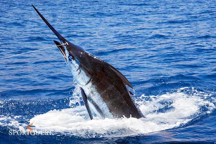 Kenya Fishing