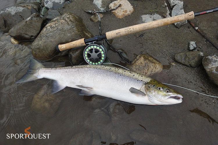 Orkla Salmon Fishing