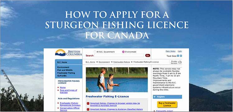 Sturgeon Fishing Licence