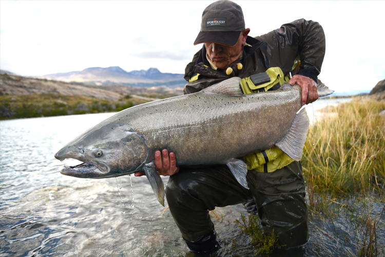 Huge Chinook Salmon