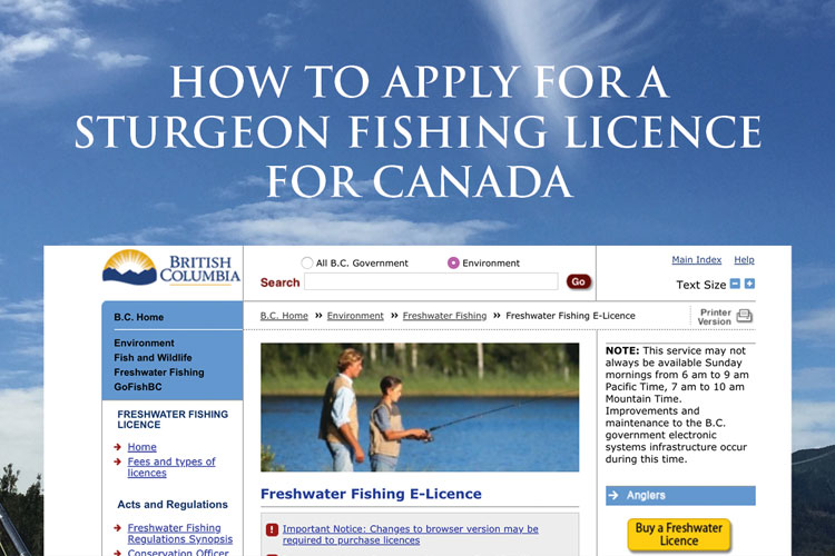 How To Apply For A Sturgeon Fishing Licence