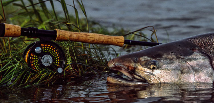 Top 5 salmon fishing destinations