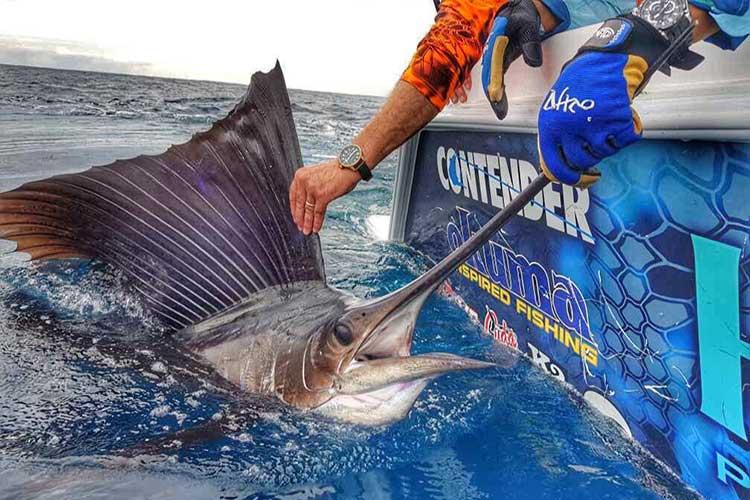 Sailfish Fishing