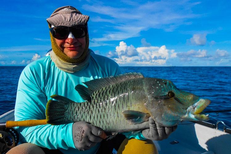 Farquhar fishing Napolean Wrasse