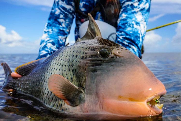 Triggerfish Providence Fishing