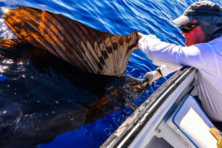 Farquhar fishing Sailfish
