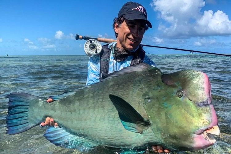 Green humphead parrotfish Providence Fishing