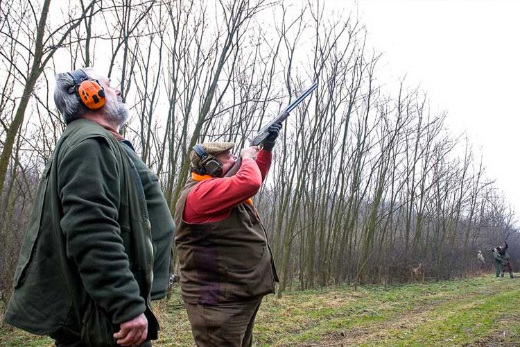 Pheasant Shooting Bodony Hungary