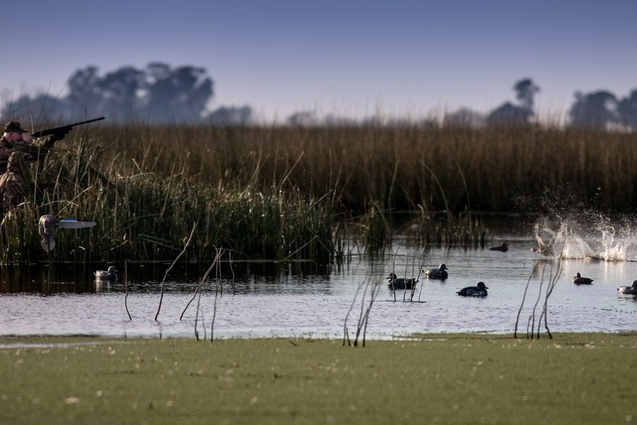 duck shooting at jacana lodge in argentina