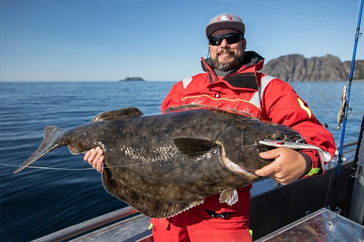 Big norway halibut