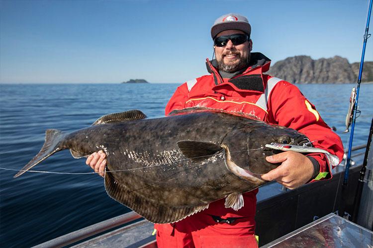 Big norway halibut