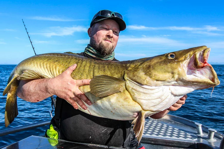 Vesterålen Cod Fishing