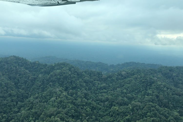 Bolivian jungle view from the plane