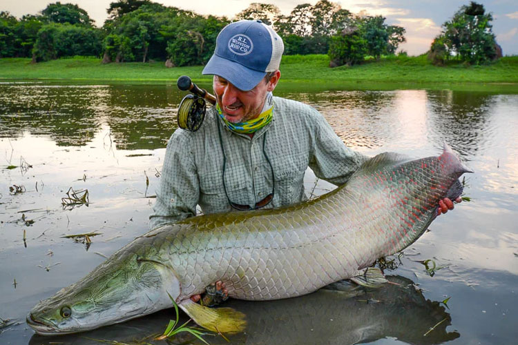 Arapaima species spotlight