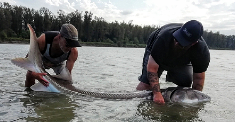 CASCADE STURGEON FISHING