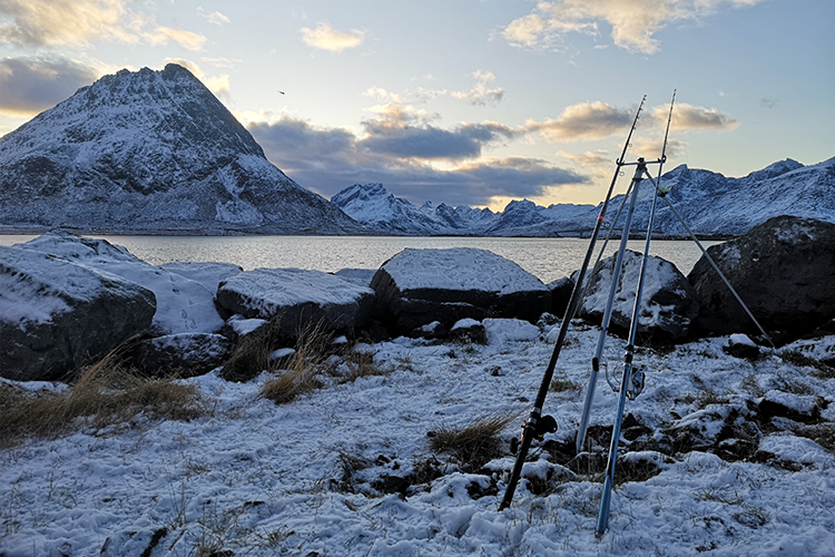 Lofoten shore fishing