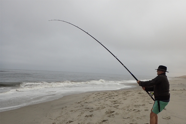 Shore Fishing for Bronze Whlaer Shark