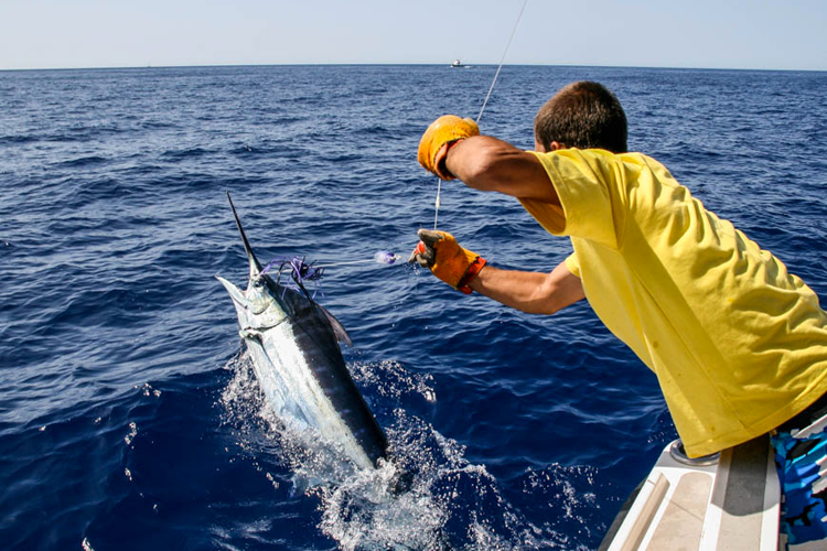 Trolling for Marlin