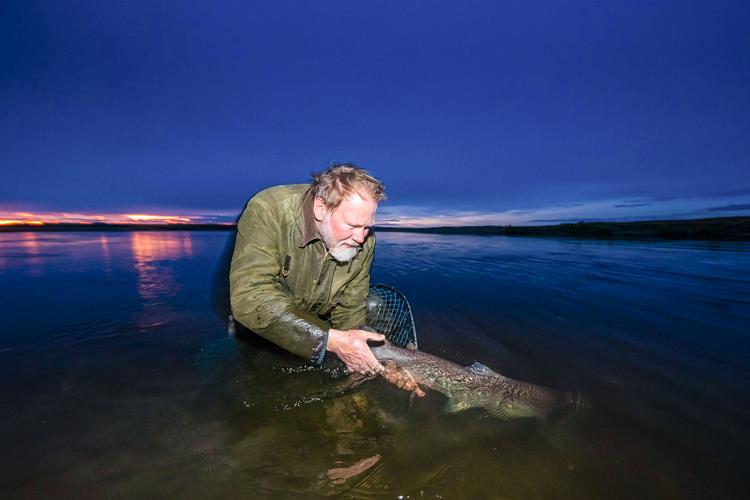 Sea trout release at Las Buitreras