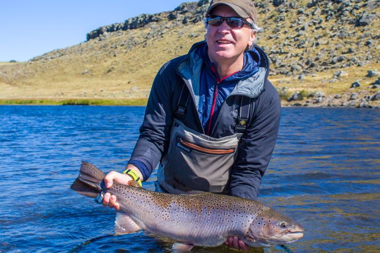 Sea run brown trout