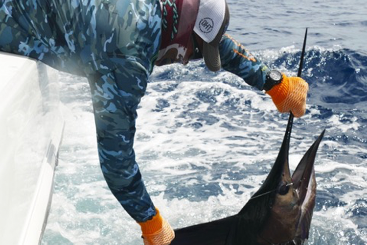 Angler removing hook from sailfish