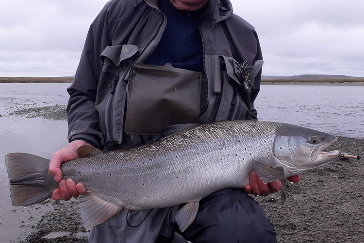 A sea trout on the bank