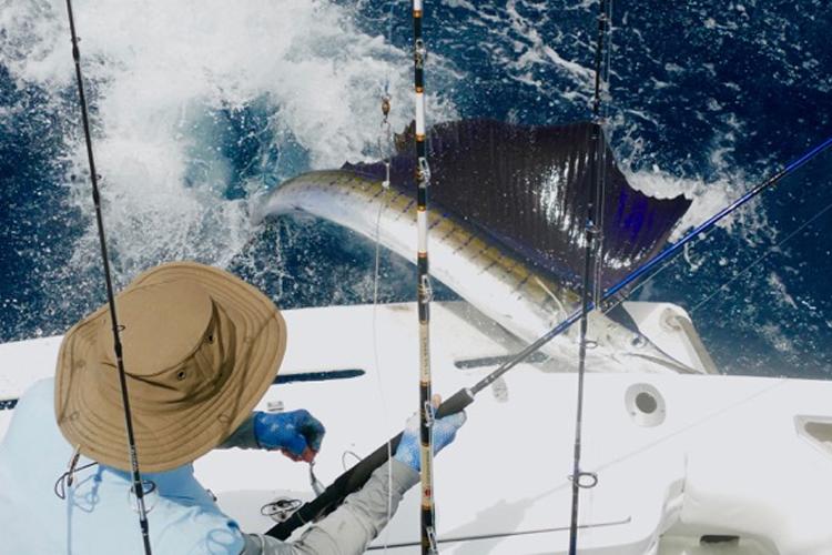 Sailfish mounting the boat