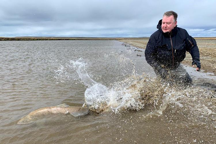 Sea trout released into river