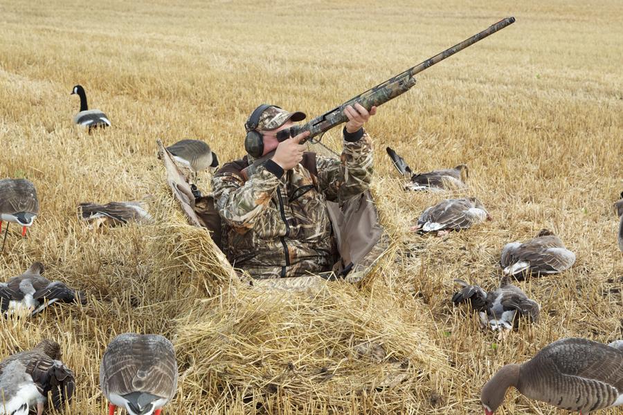 Single gun looking for Goose shooting
