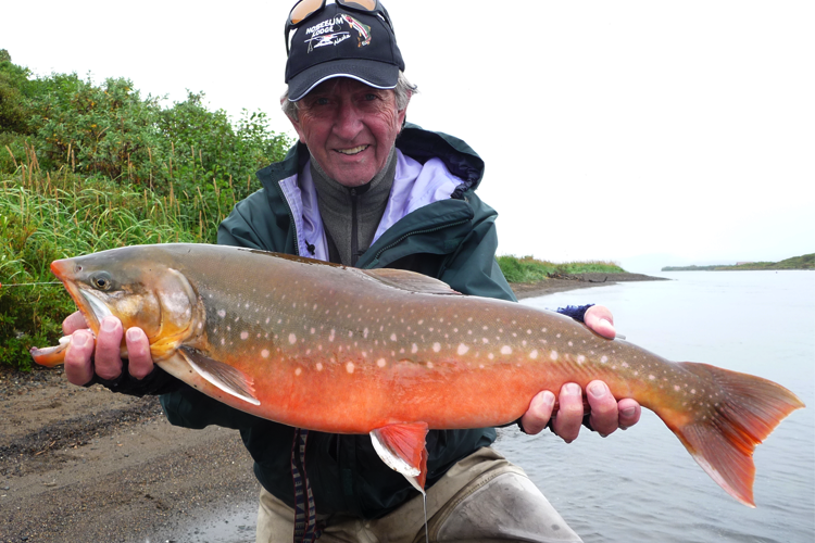 Large Dolly Varden